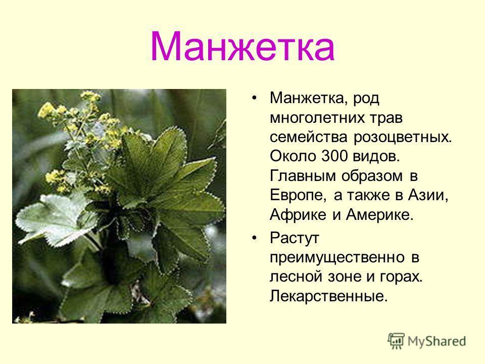 Манжетка Манжетка, род многолетних трав семейства розоцветных. Около 300 видов. Главным образом в Европе, а также в Азии, Африке и Америке. Растут преимущественно в лесной зоне и горах. Лекарственные.
