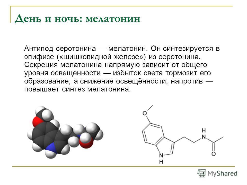 День и ночь: мелатонин Антипод серотонина мелатонин. Он синтезируется в эпифизе («шишковидной железе») из серотонина. Секреция мелатонина напрямую зависит от общего уровня освещенности избыток света тормозит его образование, а снижение освещённости,