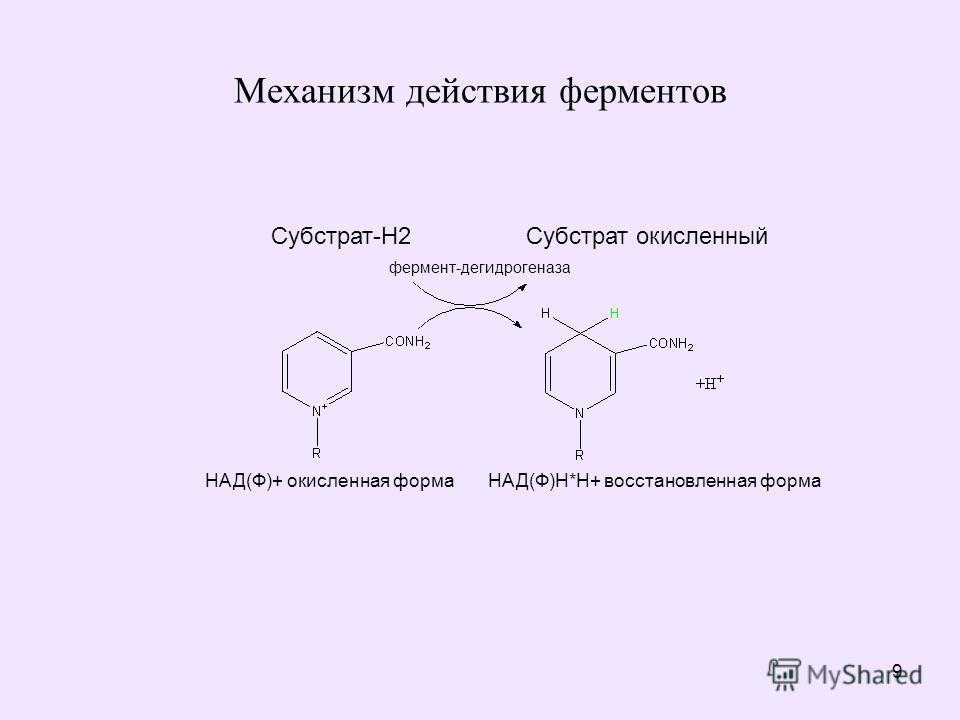 9 Механизм действия ферментов Субстрат-Н2 Субстрат окисленный фермент-дегидрогеназа НАД(Ф)+ окисленная форма НАД(Ф)Н*Н+ восстановленная форма