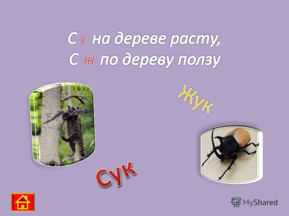 КОНУС СУКНО