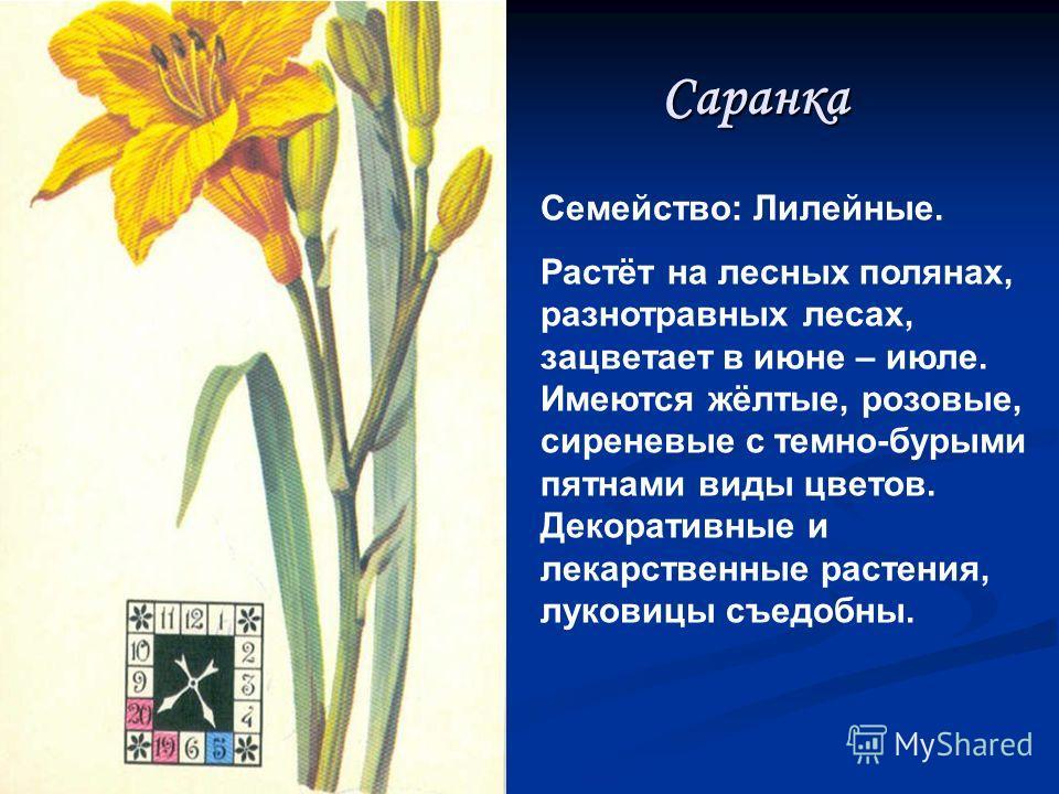 Ирис (касатик) Семейство: Касатиковые. Многолетнее растение со столонообразным корневищем. Растёт на лугах, образует небольшие куртины, цветки имеют слабый медовый запах. Семена завязываются слабо, размножается вегетативно. В народе называют его «кук