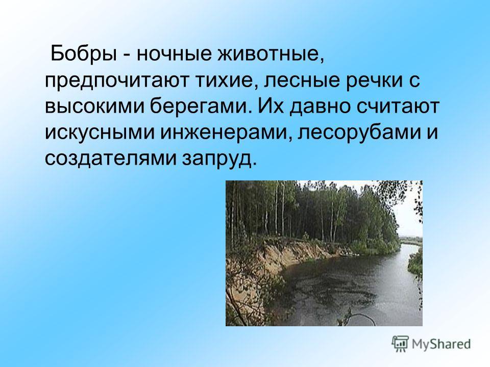 Бобры - ночные животные, предпочитают тихие, лесные речки с высокими берегами. Их давно считают искусными инженерами, лесорубами и создателями запруд.