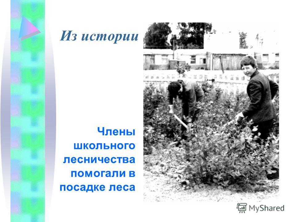 Члены школьного лесничества помогали в посадке леса Из истории