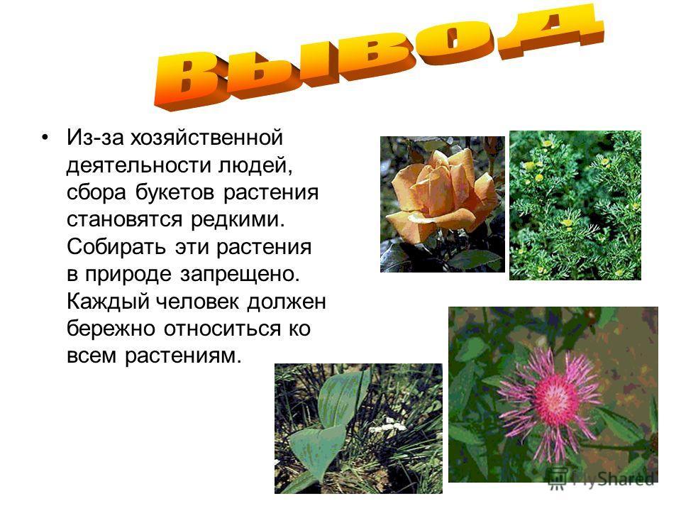 Из-за хозяйственной деятельности людей, сбора букетов растения становятся редкими. Собирать эти растения в природе запрещено. Каждый человек должен бережно относиться ко всем растениям.
