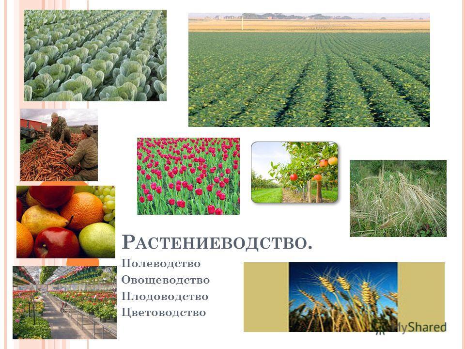 Р АСТЕНИЕВОДСТВО. Полеводство Овощеводство Плодоводство Цветоводство