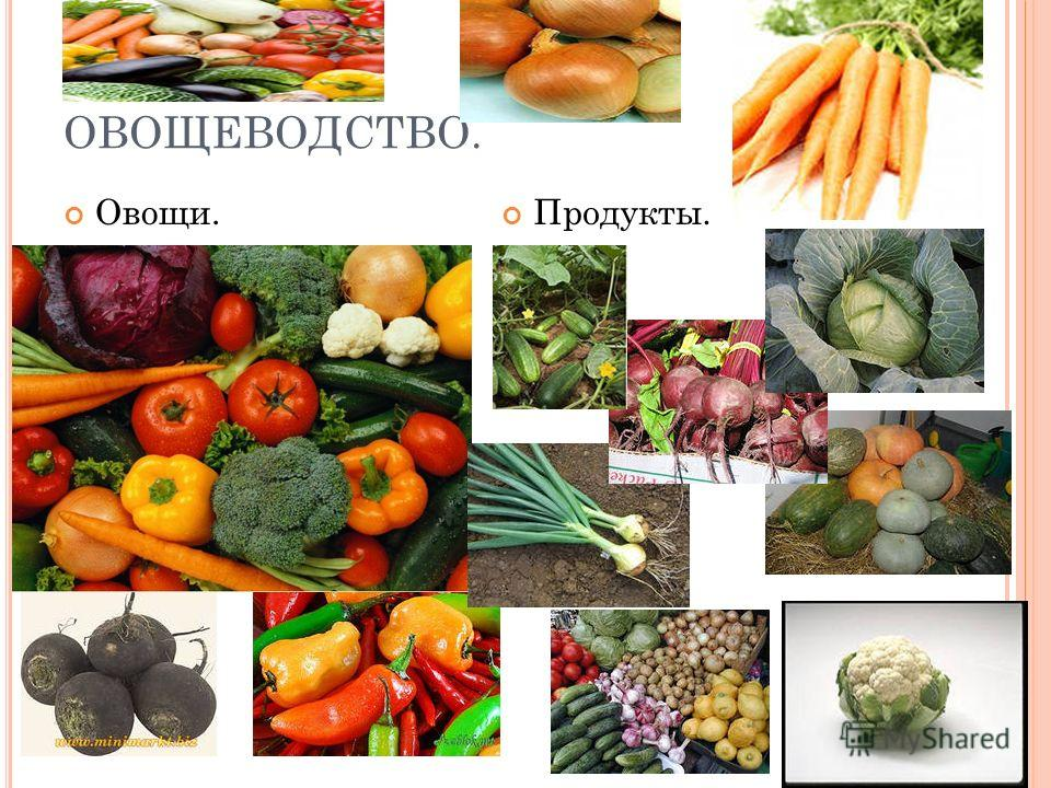 ОВОЩЕВОДСТВО. Овощи. Продукты.