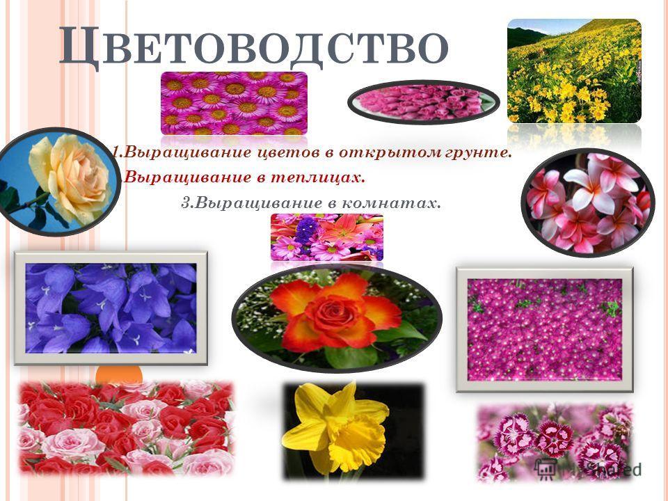 Ц ВЕТОВОДСТВО 1.Выращивание цветов в открытом грунте. 2.Выращивание в теплицах. 3.Выращивание в комнатах.