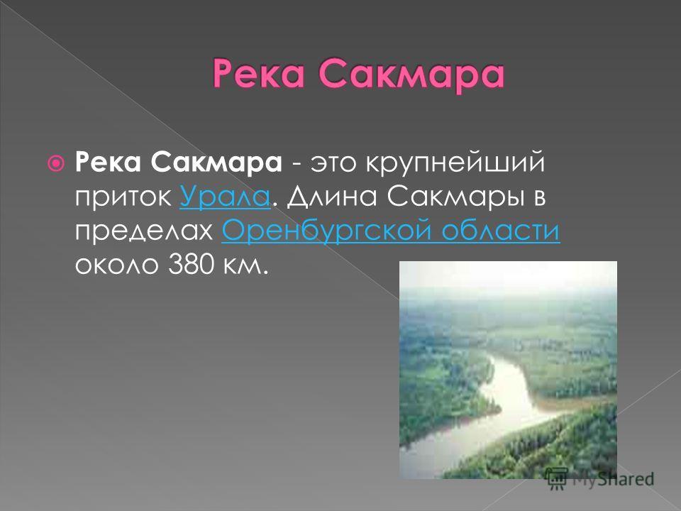 Река Сакмара - это крупнейший приток Урала. Длина Сакмары в пределах Оренбургской области около 380 км.УралаОренбургской области