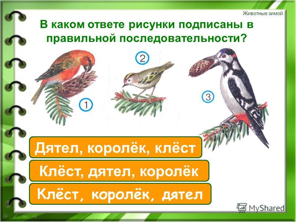 Животные зимой. В каком ответе рисунки подписаны в правильной последовательности? Клёст, королёк, дятел Дятел, королёк, клёст Клёст, дятел, королёк