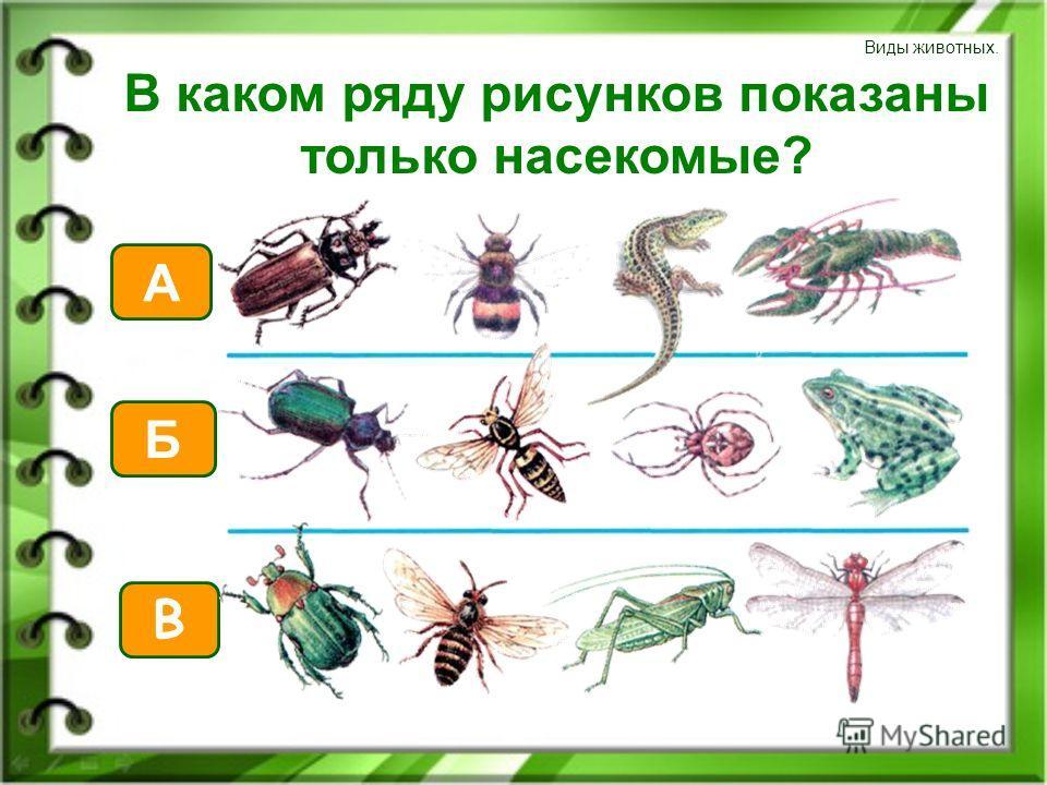 Виды животных. В каком ряду рисунков показаны только насекомые? В А Б