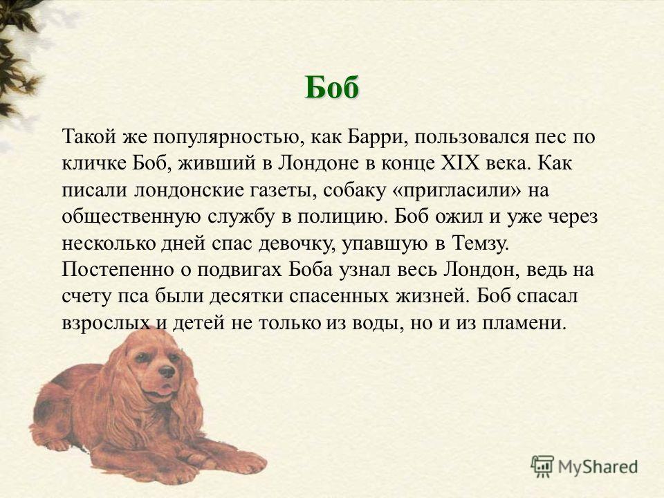 Такой же популярностью, как Барри, пользовался пес по кличке Боб, живший в Лондоне в конце XIX века. Как писали лондонские газеты, собаку «пригласили» на общественную службу в полицию. Боб ожил и уже через несколько дней спас девочку, упавшую в Темзу