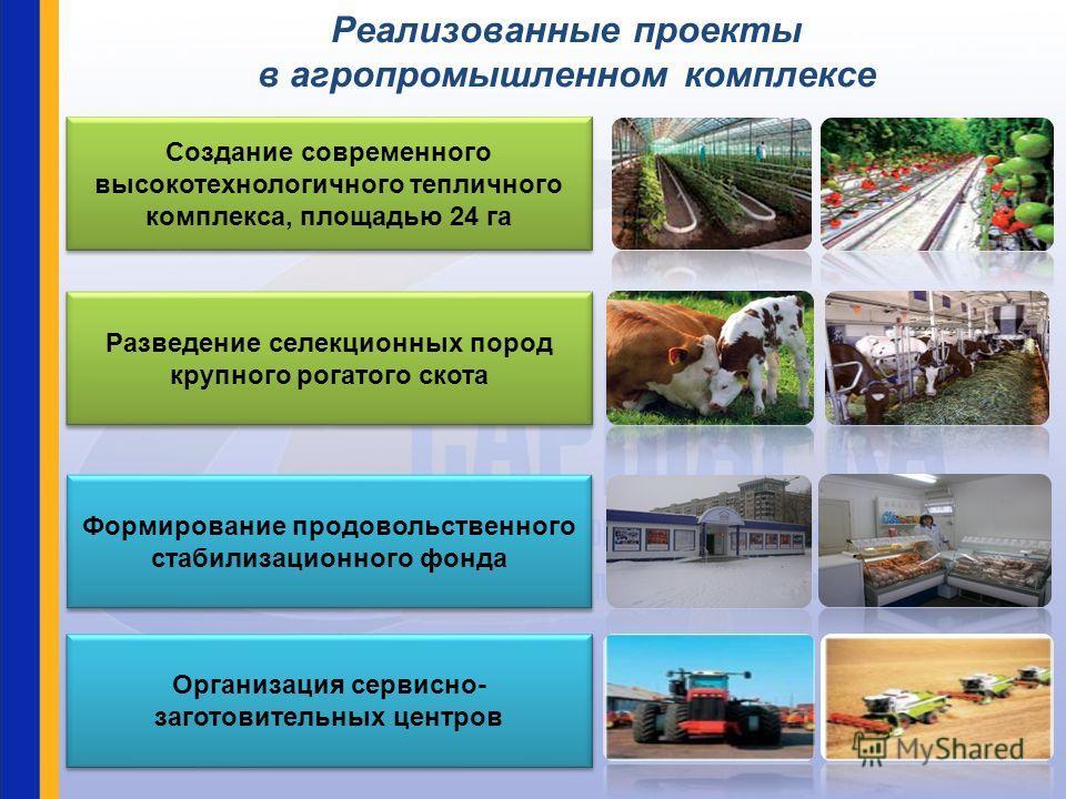 Создание современного высокотехнологичного тепличного комплекса, площадью 24 га Создание современного высокотехнологичного тепличного комплекса, площадью 24 га Разведение селекционных пород крупного рогатого скота Формирование продовольственного стаб