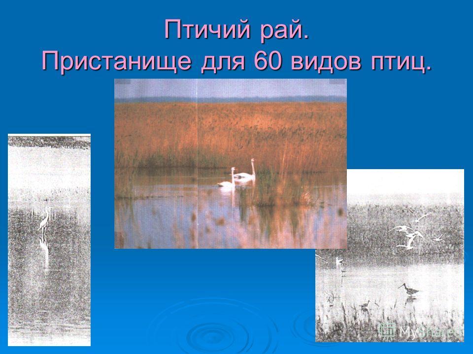 Птичий рай. Пристанище для 60 видов птиц.