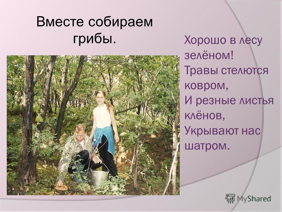 Хорошо в лесу зелёном! Травы стелются ковром, И резные листья клёнов, Укрывают нас шатром. Вместе собираем грибы.