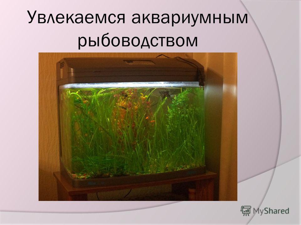 Увлекаемся аквариумным рыбоводством