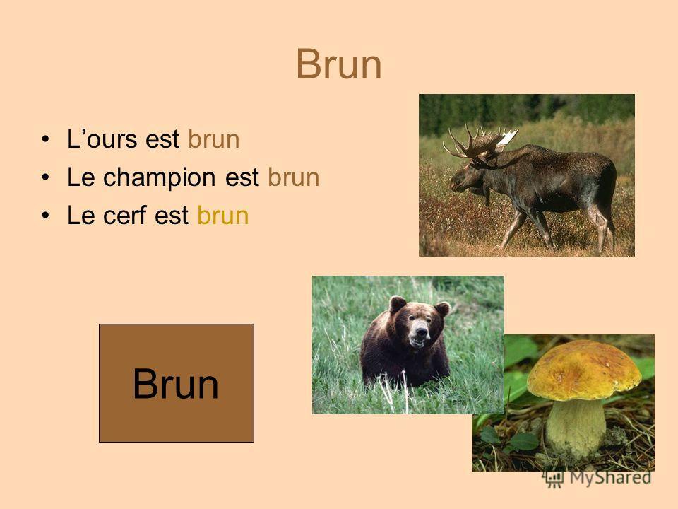 Brun Lours est brun Le champion est brun Le cerf est brun Brun