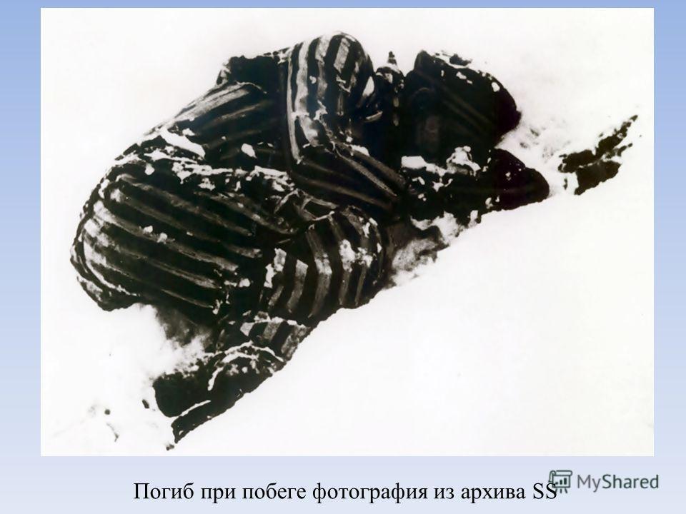 Погиб при побеге фотография из архива SS