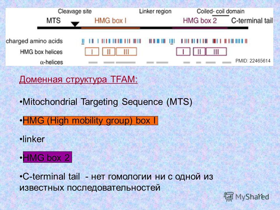 11 Доменная структура TFAM: Mitochondrial Targeting Sequence (MTS) HMG (High mobility group) box I linker HMG box 2 C-terminal tail - нет гомологии ни с одной из известных последовательностей PMID: 22465614
