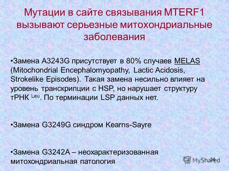 38 Мутации в сайте связывания MTERF1 вызывают серьезные митохондриальные заболевания Замена A3243G присутствует в 80% случаев MELAS (Mitochondrial Encephalomyopathy, Lactic Acidosis, Strokelike Episodes). Такая замена несильно влияет на уровень транс