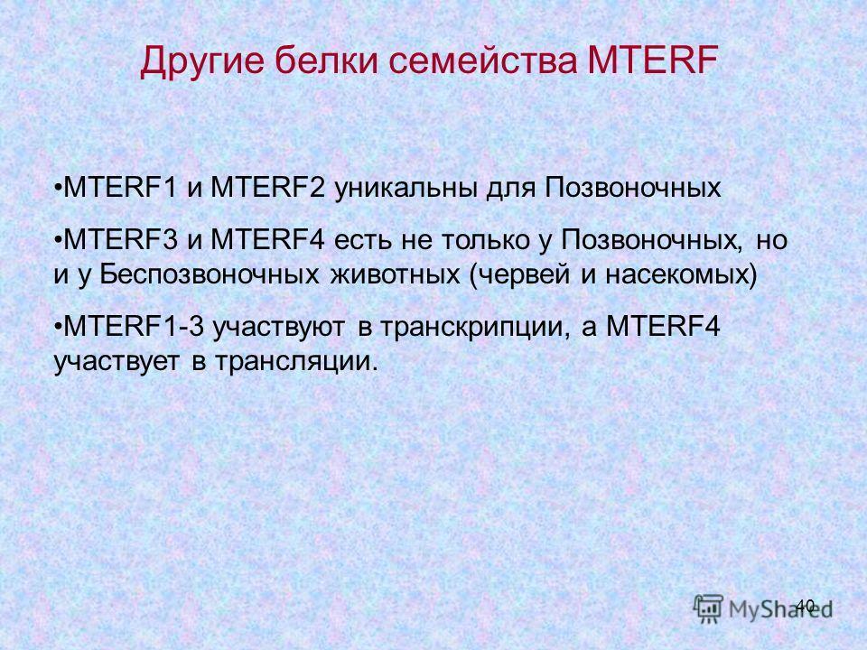 40 Другие белки семейства MTERF MTERF1 и MTERF2 уникальны для Позвоночных MTERF3 и MTERF4 есть не только у Позвоночных, но и у Беспозвоночных животных (червей и насекомых) MTERF1-3 участвуют в транскрипции, а MTERF4 участвует в трансляции.