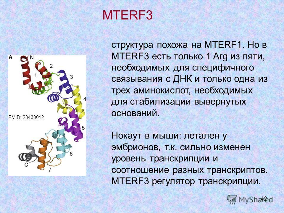 42 структура похожа на MTERF1. Но в MTERF3 есть только 1 Arg из пяти, необходимых для специфичного связывания с ДНК и только одна из трех аминокислот, необходимых для стабилизации вывернутых оснований. Нокаут в мыши: летален у эмбрионов, т.к. сильно