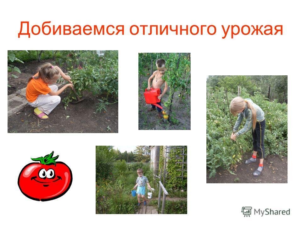 Добиваемся отличного урожая
