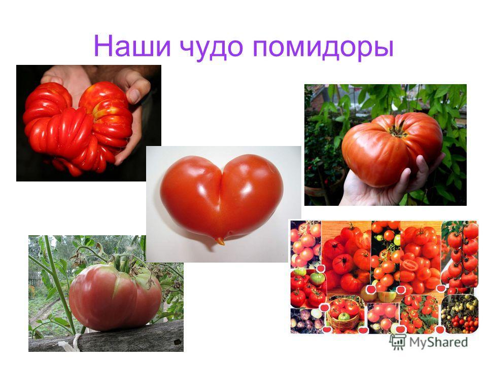 Наши чудо помидоры