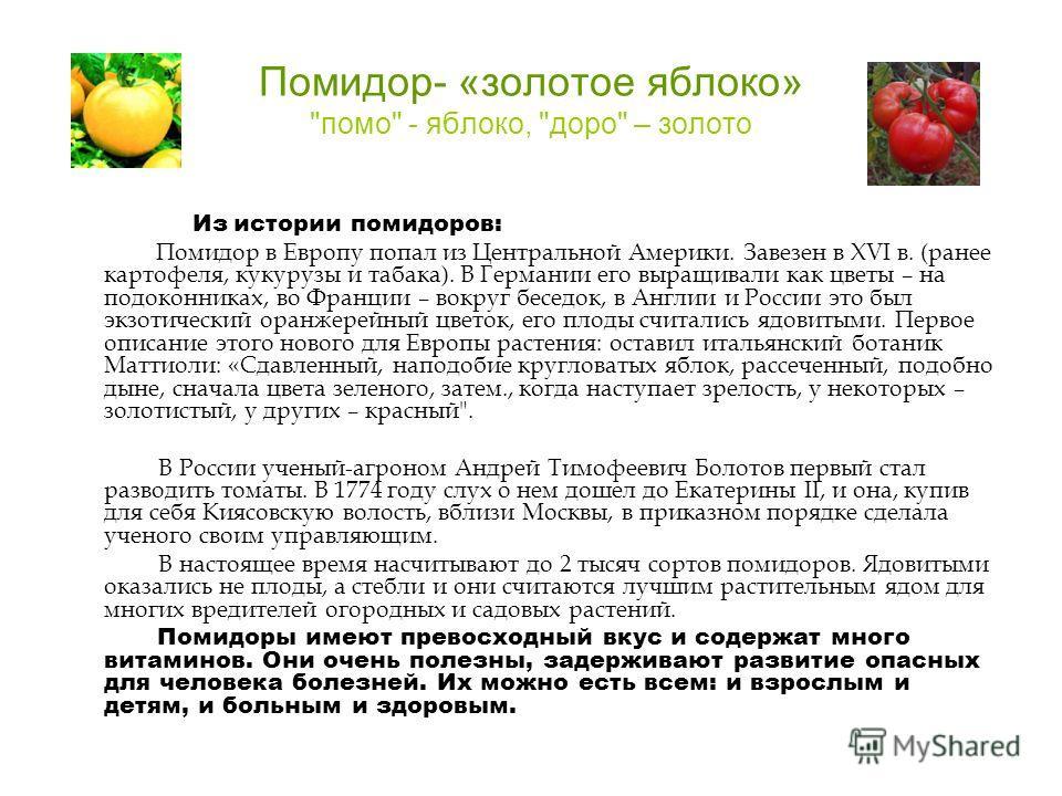 Помидор- «золотое яблоко»