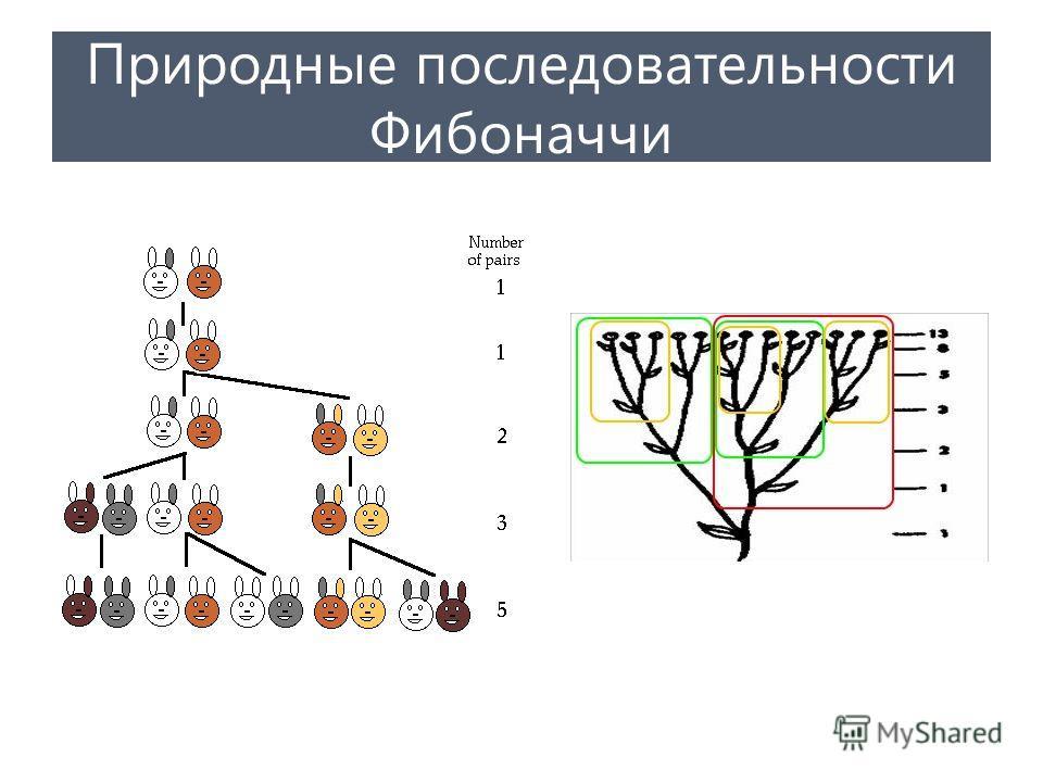 Природные последовательности Фибоначчи