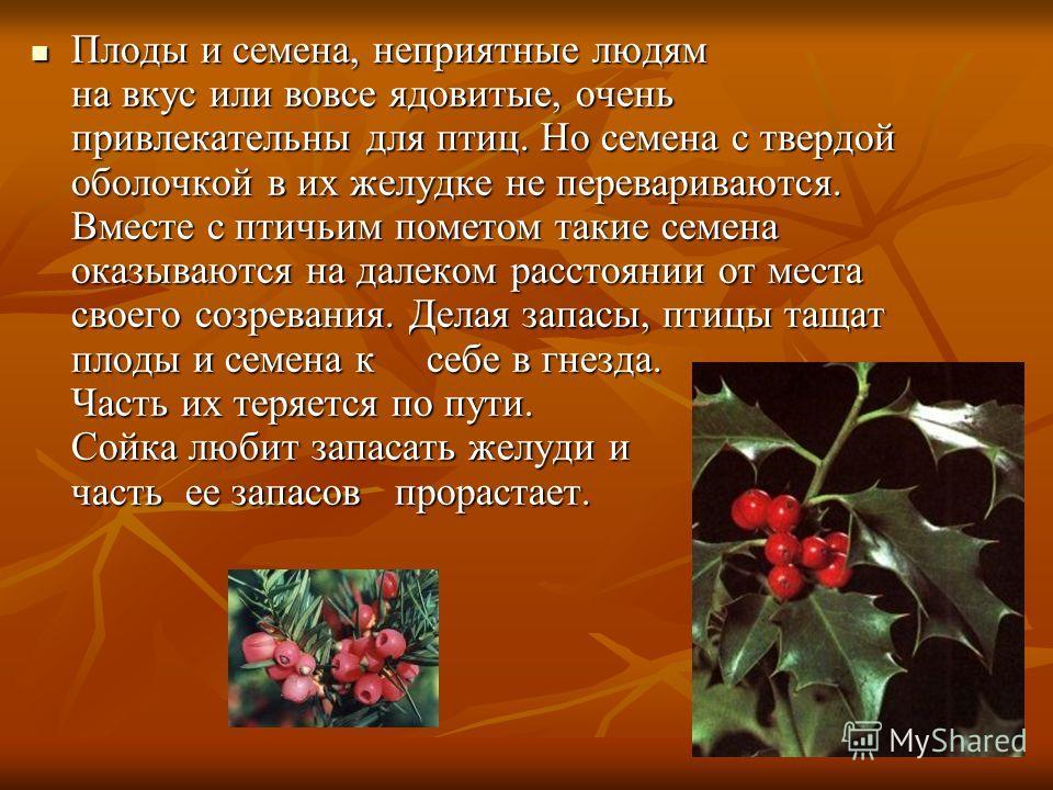 Плоды и семена, неприятные людям на вкус или вовсе ядовитые, очень привлекательны для птиц. Но семена с твердой оболочкой в их желудке не перевариваются. Вместе с птичьим пометом такие семена оказываются на далеком расстоянии от места своего созреван
