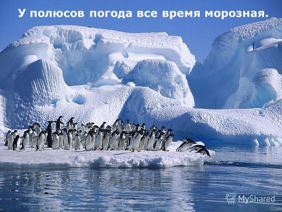 У полюсов погода все время морозная.