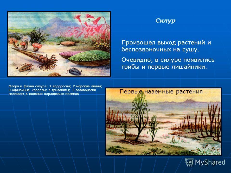 Силур Произошел выход растений и беспозвоночных на сушу. Очевидно, в силуре появились грибы и первые лишайники. Флора и фауна силура: 1-водоросли; 2-морские лилии; 3-одиночные кораллы; 4-трилобиты; 5-головоногий моллюск; 6-колония коралловых полипов