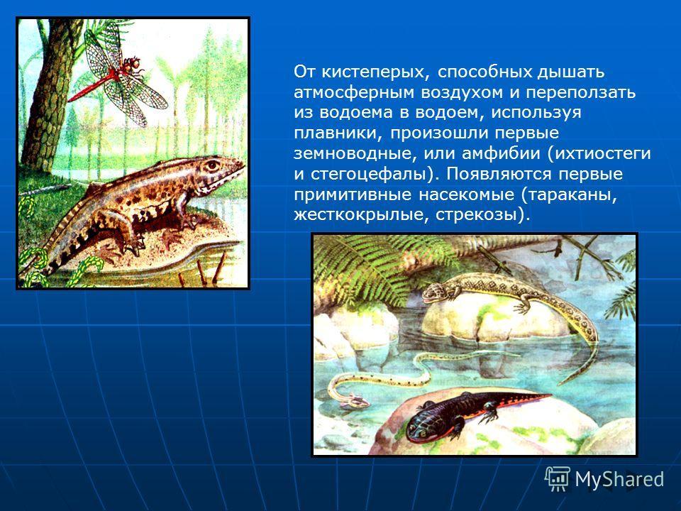 От кистеперых, способных дышать атмосферным воздухом и переползать из водоема в водоем, используя плавники, произошли первые земноводные, или амфибии (ихтиостеги и стегоцефалы). Появляются первые примитивные насекомые (тараканы, жесткокрылые, стрекоз