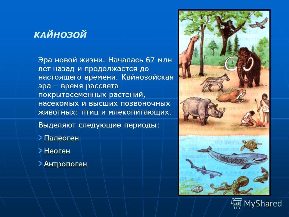 КАЙНОЗОЙ Эра новой жизни. Началась 67 млн лет назад и продолжается до настоящего времени. Кайнозойская эра – время рассвета покрытосеменных растений, насекомых и высших позвоночных животных: птиц и млекопитающих. Выделяют следующие периоды: Палеоген