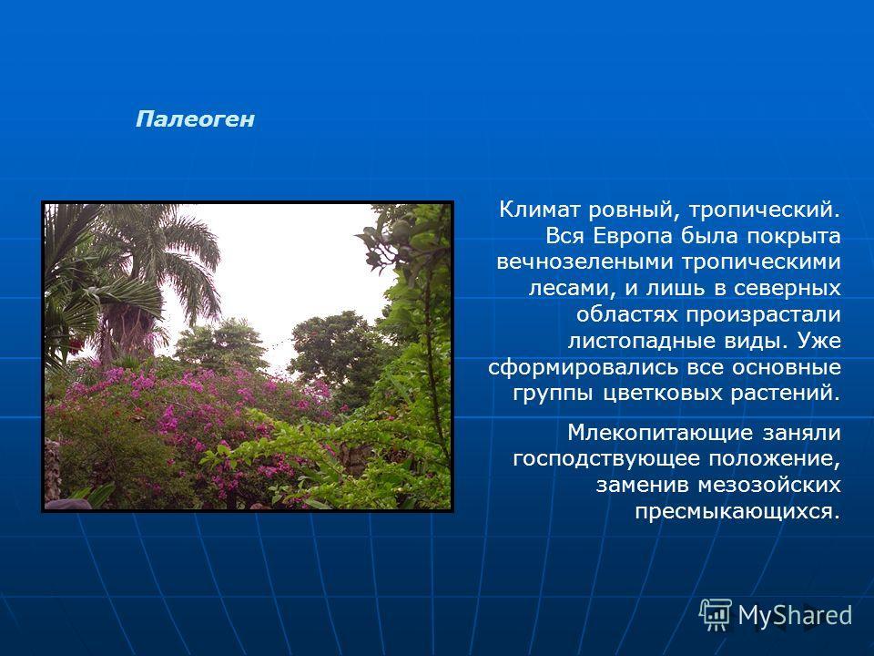 Палеоген Климат ровный, тропический. Вся Европа была покрыта вечнозелеными тропическими лесами, и лишь в северных областях произрастали листопадные виды. Уже сформировались все основные группы цветковых растений. Млекопитающие заняли господствующее п
