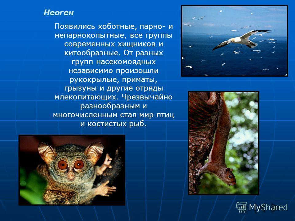 Неоген Появились хоботные, парно- и непарнокопытные, все группы современных хищников и китообразные. От разных групп насекомоядных независимо произошли рукокрылые, приматы, грызуны и другие отряды млекопитающих. Чрезвычайно разнообразным и многочисле
