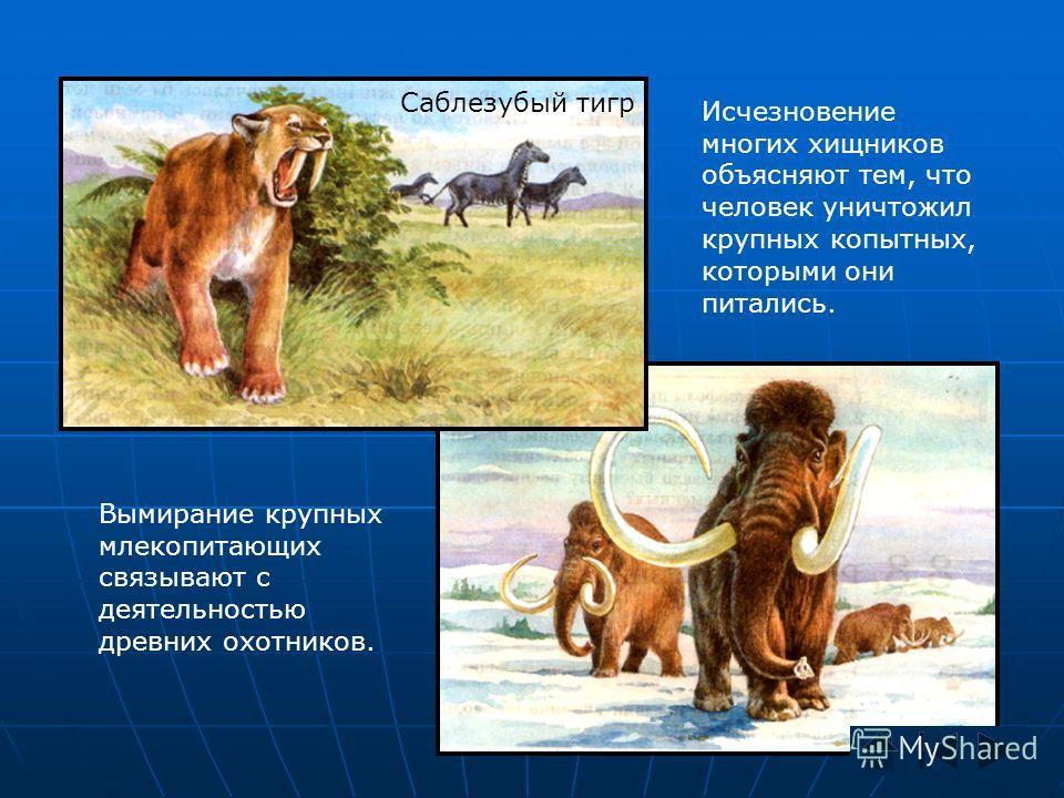 Вымирание крупных млекопитающих связывают с деятельностью древних охотников. Исчезновение многих хищников объясняют тем, что человек уничтожил крупных копытных, которыми они питались. Мамонты Саблезубый тигр