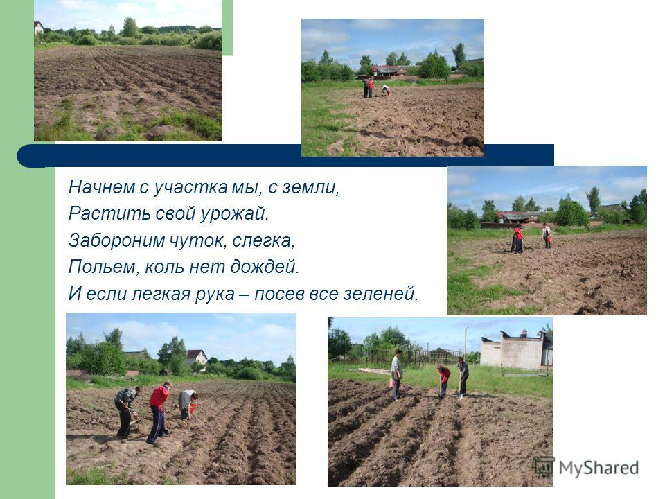 Начнем с участка мы, с земли, Растить свой урожай. Забороним чуток, слегка, Польем, коль нет дождей. И если легкая рука – посев все зеленей.