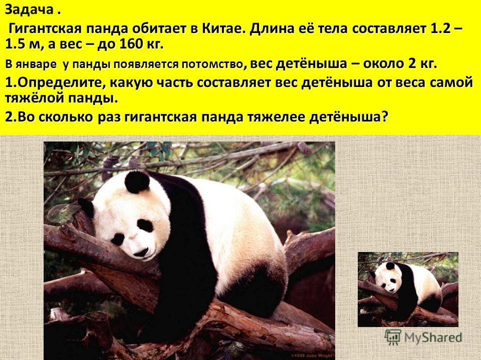 . Задача. Гигантская панда обитает в Китае. Длина её тела составляет 1.2 – 1.5 м, а вес – до 160 кг. Гигантская панда обитает в Китае. Длина её тела составляет 1.2 – 1.5 м, а вес – до 160 кг. В январе у панды появляется потомство, вес детёныша – окол