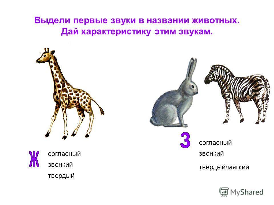 Выдели первые звуки в названии животных. Дай характеристику этим звукам. согласный звонкий твердый согласный звонкий твердый/мягкий