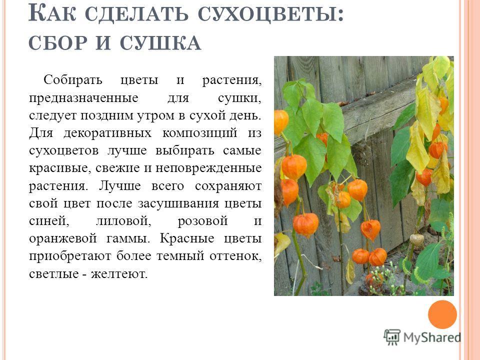 К АК СДЕЛАТЬ СУХОЦВЕТЫ : СБОР И СУШКА Собирать цветы и растения, предназначенные для сушки, следует поздним утром в сухой день. Для декоративных композиций из сухоцветов лучше выбирать самые красивые, свежие и неповрежденные растения. Лучше всего сох