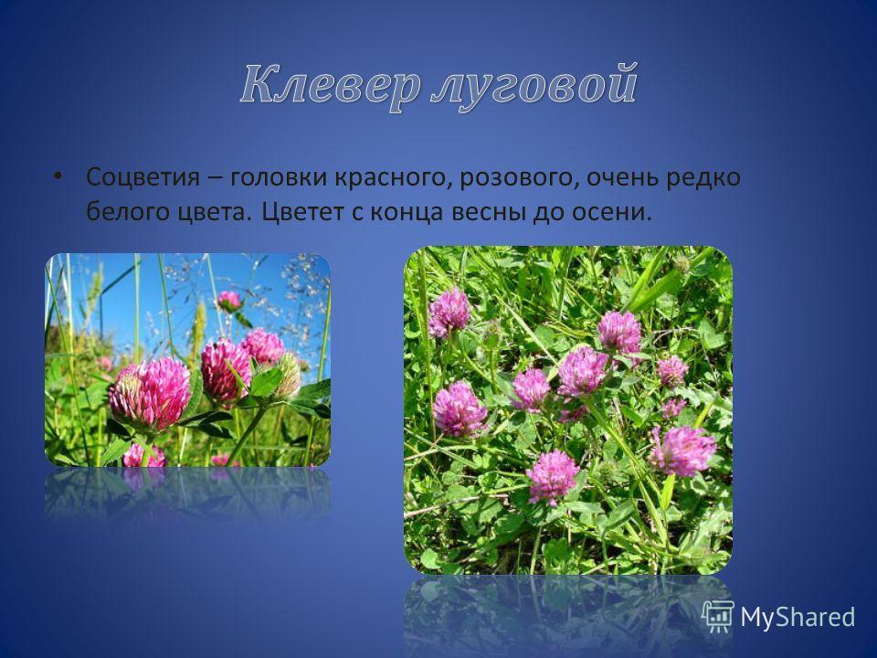 В качестве лекарственного сырья используют воронковидные цветки василька синего. лекарственного сырья С 1968 года василёк синий является национальным цветком Эстонии.1968 годаЭстонии