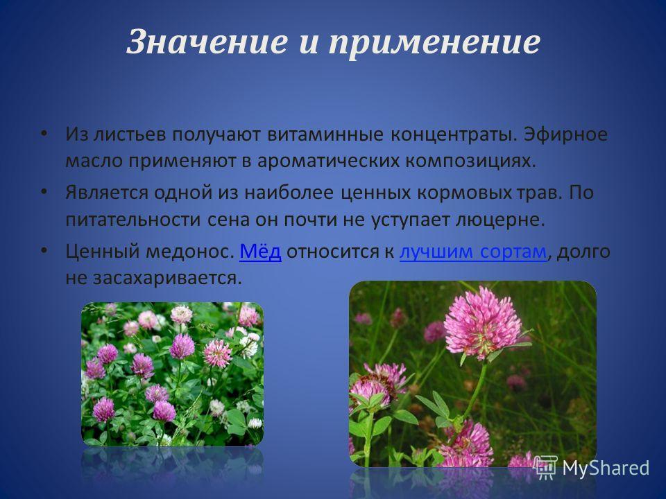 Соцветия – головки красного, розового, очень редко белого цвета. Цветет с конца весны до осени.