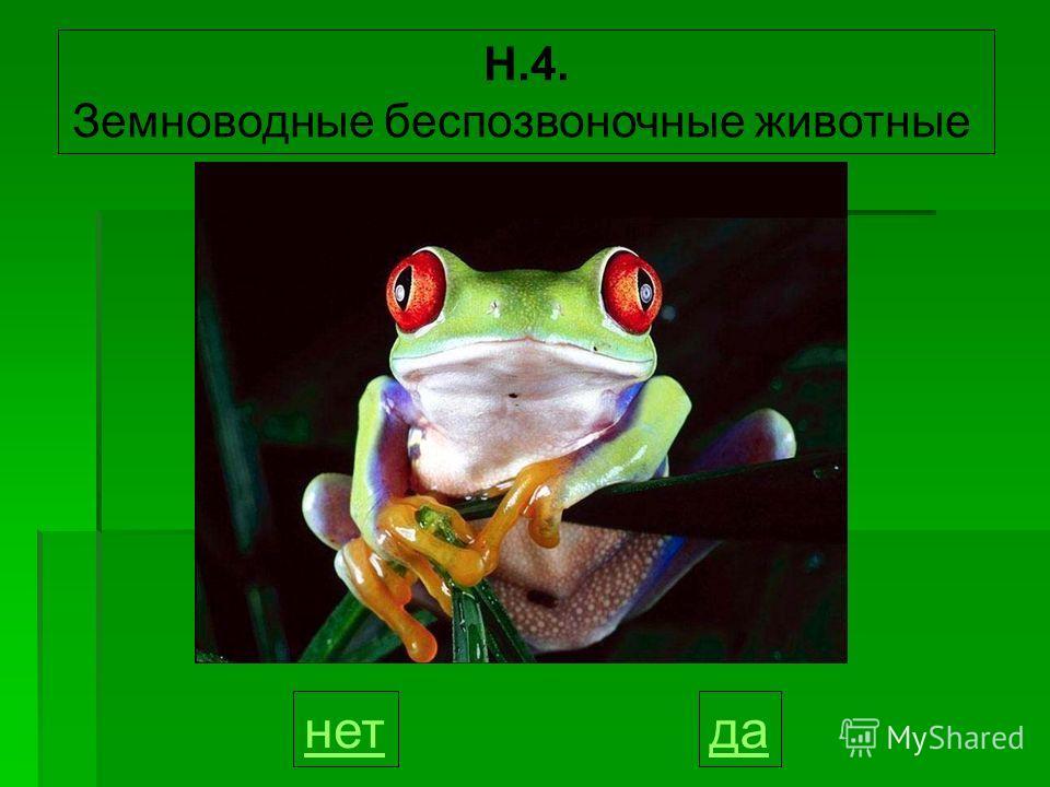 Н.4. Земноводные беспозвоночные животные данет