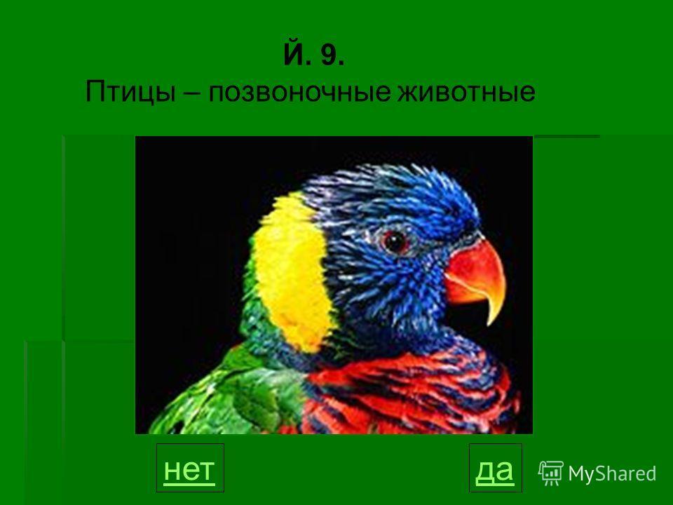 Й. 9. Птицы – позвоночные животные данет 9