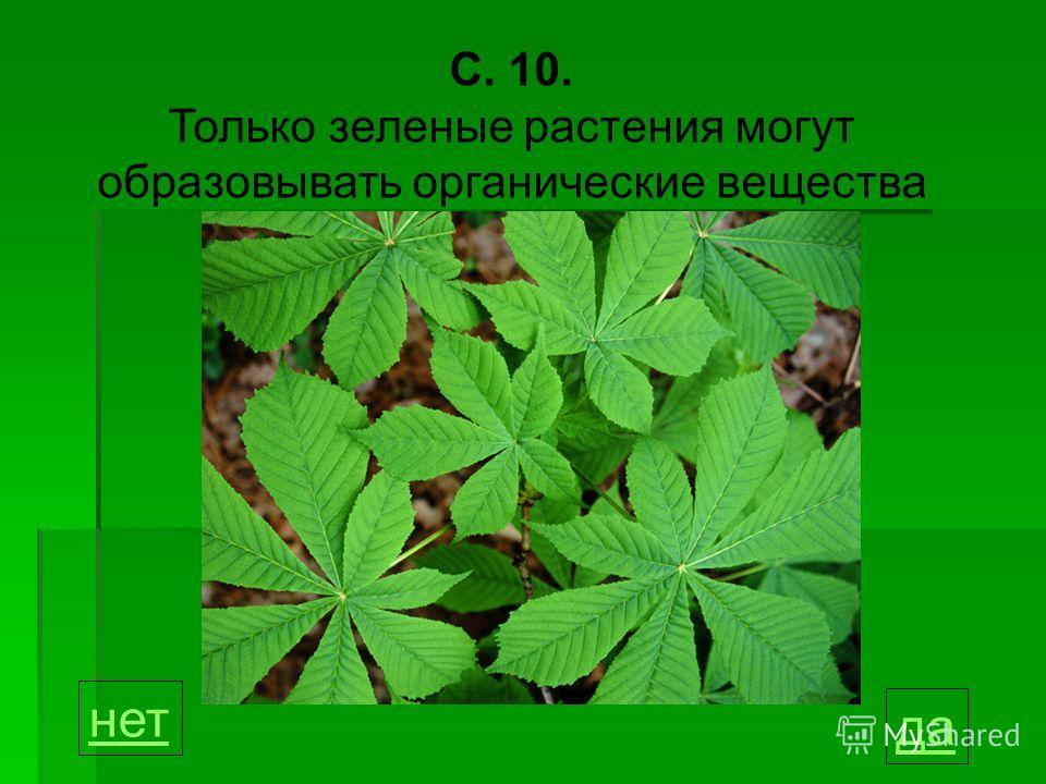 С. 10. Только зеленые растения могут образовывать органические вещества да нет