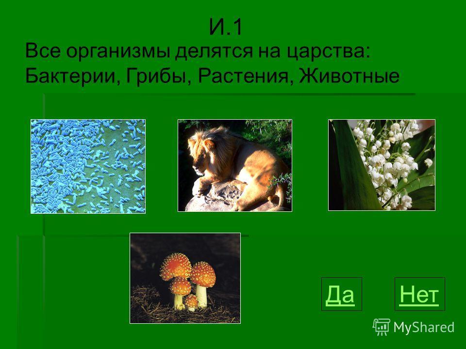 Все организмы делятся на царства: Бактерии, Грибы, Растения, Животные И.1 ДаНет