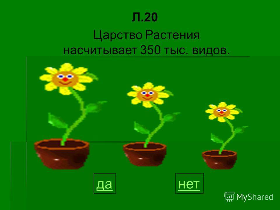данет Царство Растения насчитывает 350 тыс. видов. Л.20