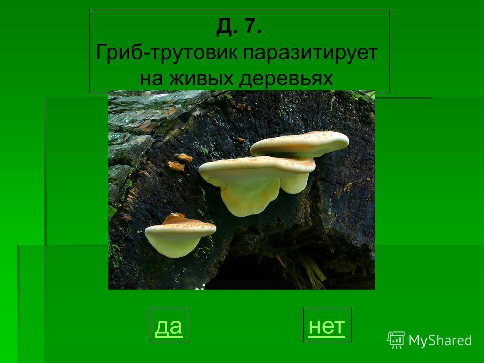 Д. 7. Гриб-трутовик паразитирует на живых деревьях данет
