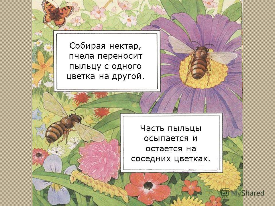 При этом ее тело покрывается цветочной пыльцой.